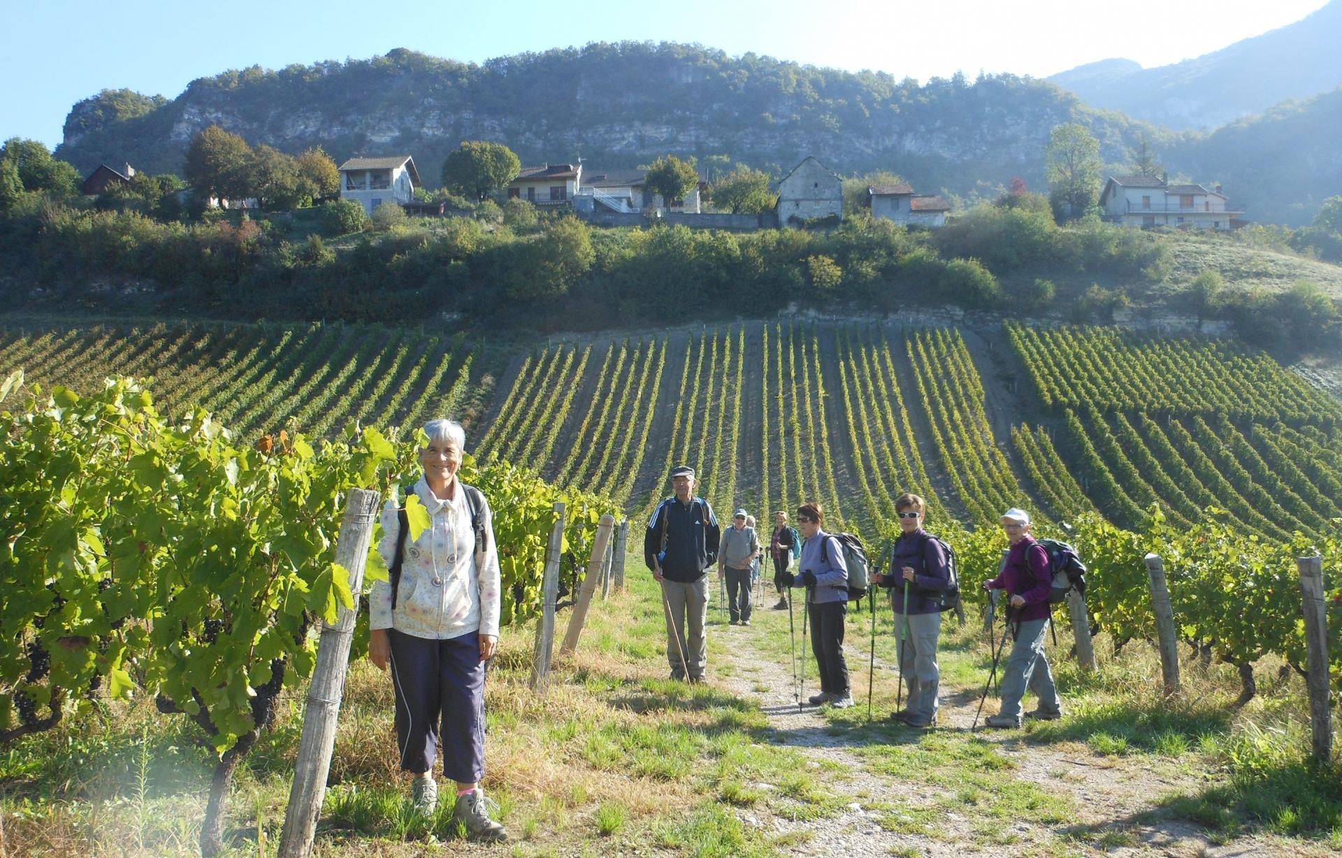 Balade dans les vignes de savoie